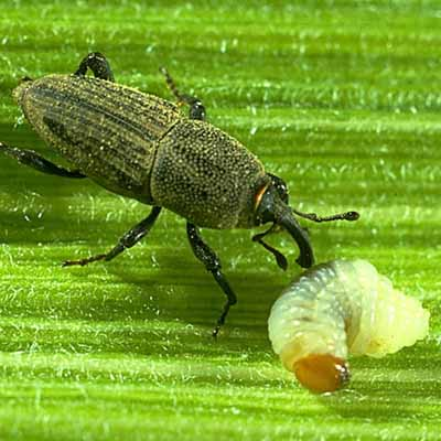 Lawn Insect Control by Bio Green Indiana