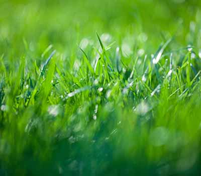 Bio Green lawn care and fertilization